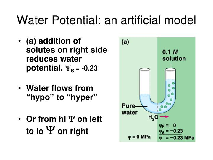 Water Potential: an artificial model