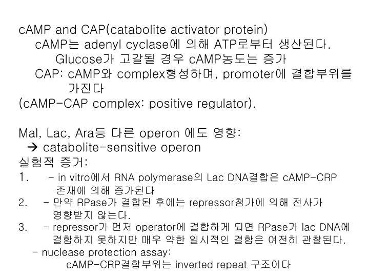 cAMP and CAP(catabolite activator protein)