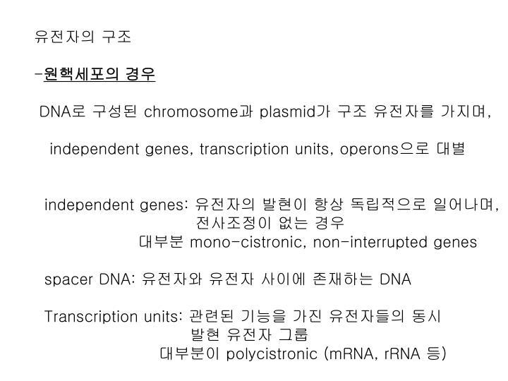 유전자의 구조