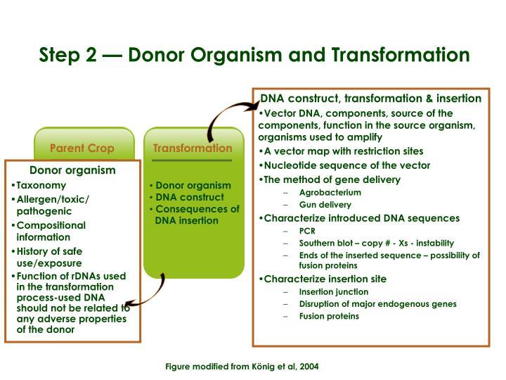 DNA construct, transformation & insertion