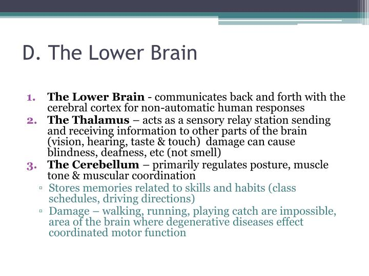 D. The Lower Brain