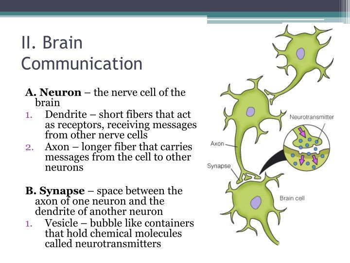II. Brain