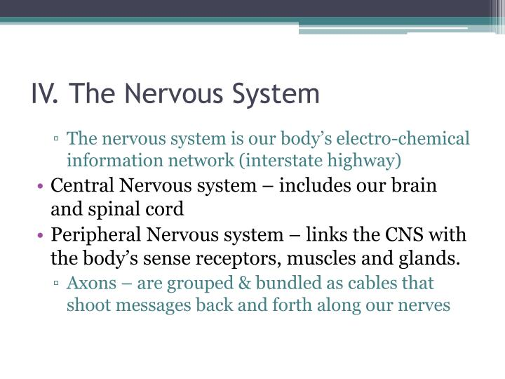 IV. The Nervous System