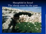 sheepfold in israel the sheep enter by the gate