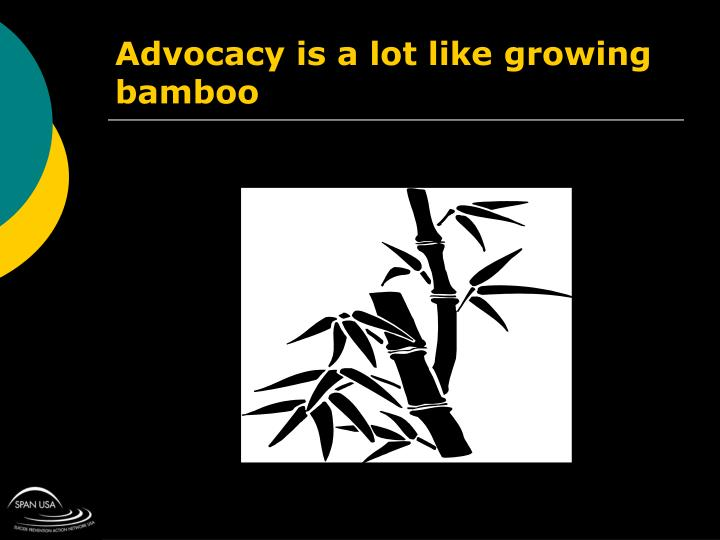 Advocacy is a lot like growing bamboo