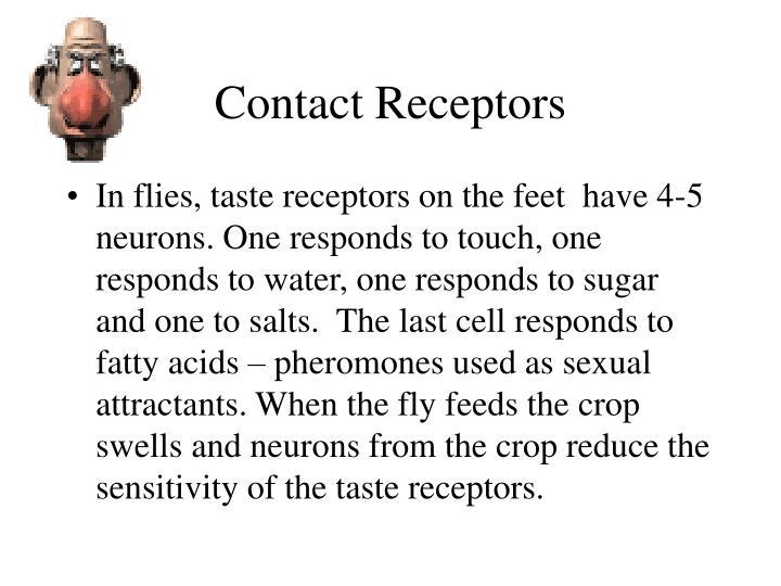 Contact Receptors