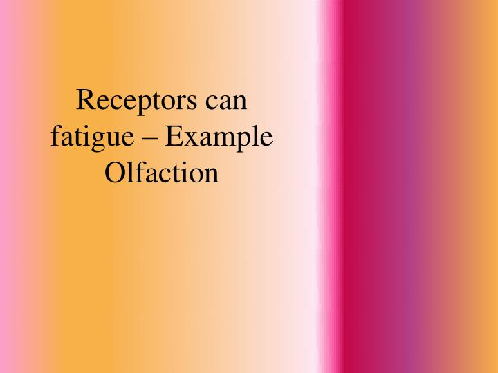 Receptors can fatigue – Example Olfaction
