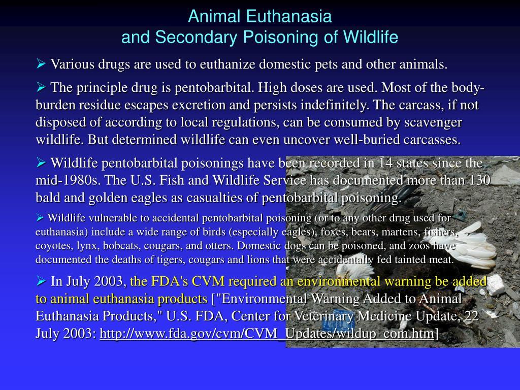Animal Euthanasia