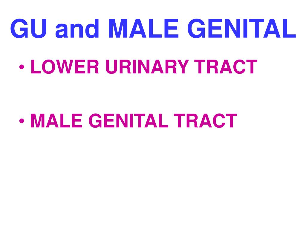 GU and MALE GENITAL