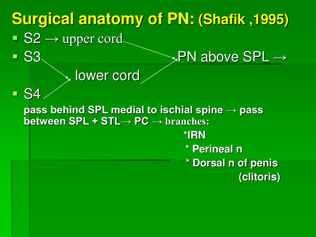 Surgical anatomy of PN: