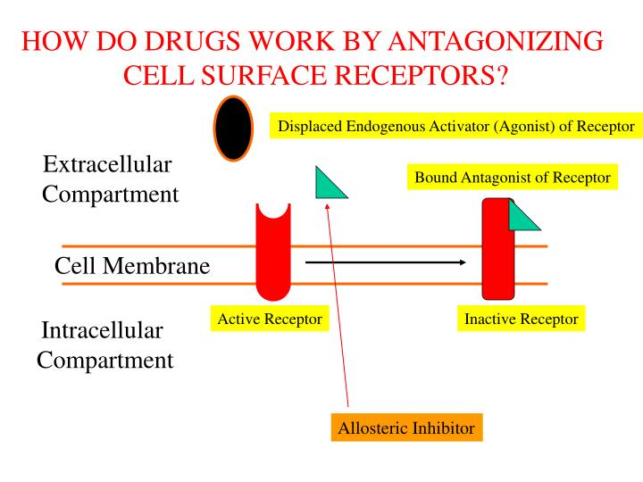 HOW DO DRUGS WORK BY ANTAGONIZING