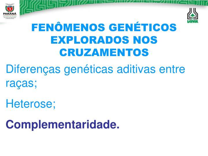 FENÔMENOS GENÉTICOS EXPLORADOS NOS CRUZAMENTOS