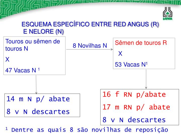 ESQUEMA ESPECÍFICO ENTRE RED ANGUS (R)