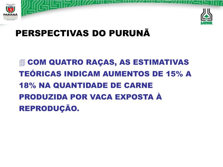 PERSPECTIVAS DO PURUNÃ