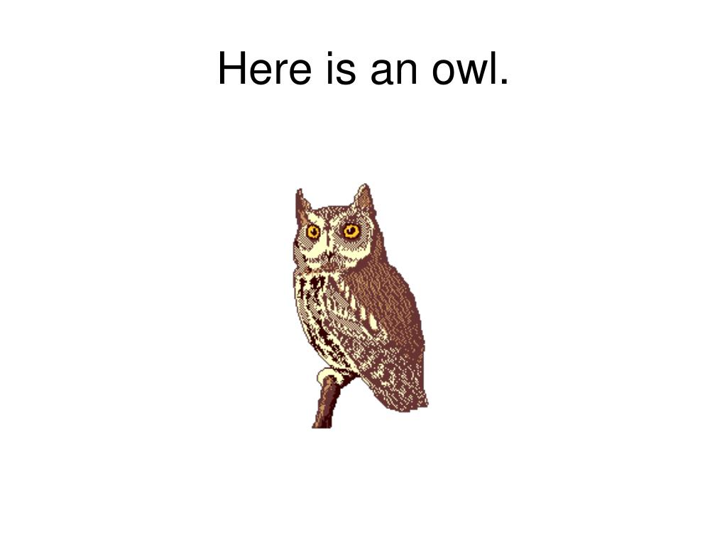 Here is an owl.