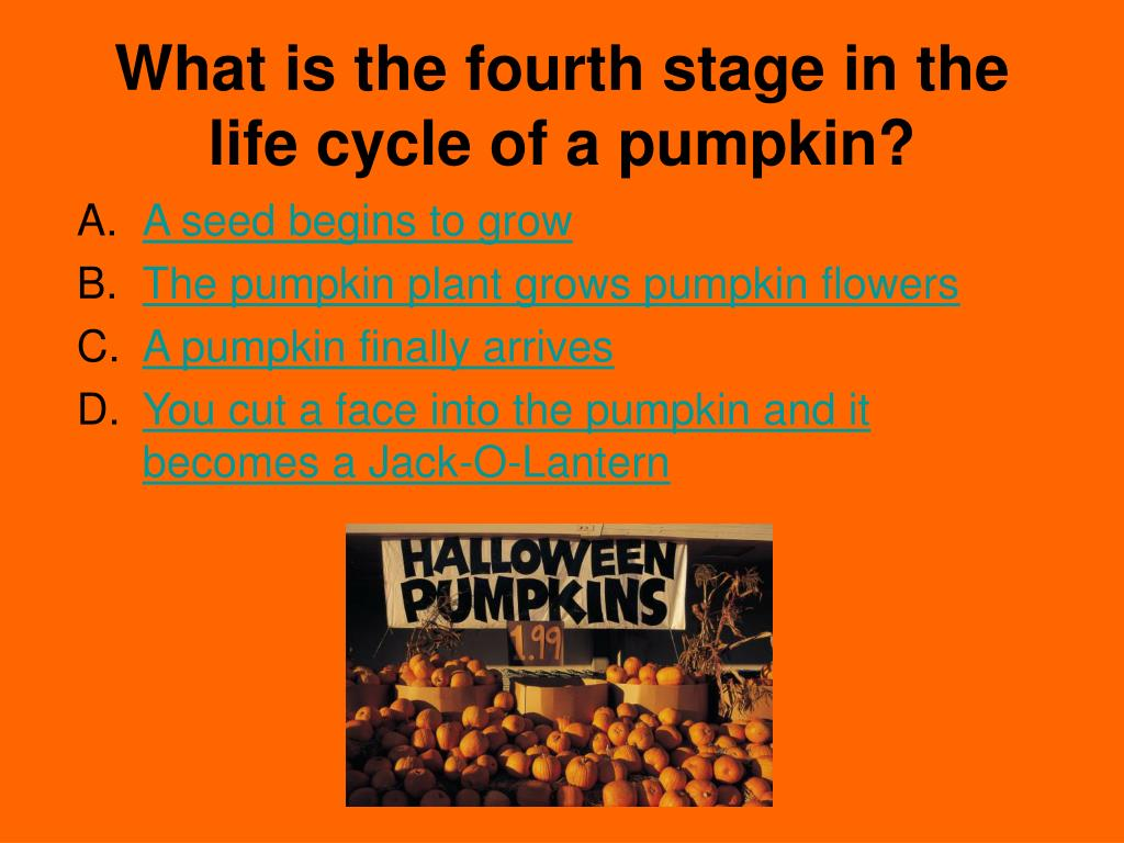 What is the fourth stage in the life cycle of a pumpkin?