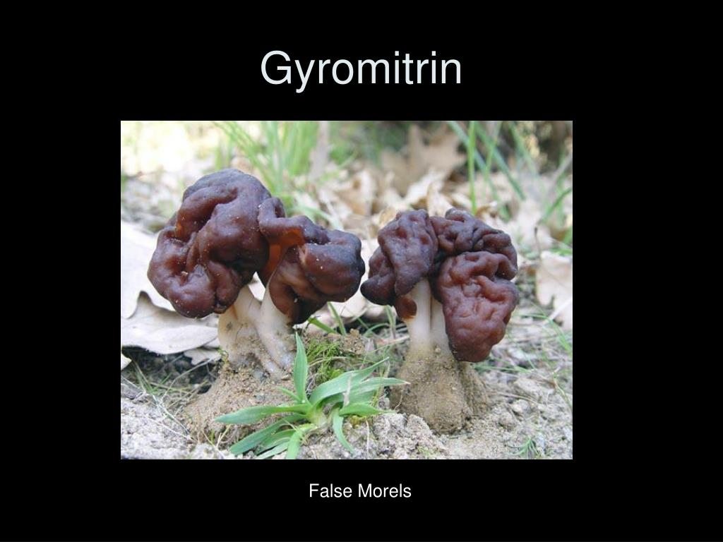 Gyromitrin