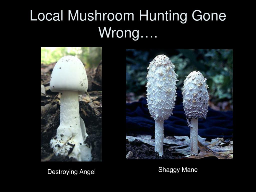 Local Mushroom Hunting Gone Wrong….