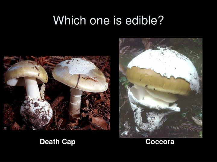 Which one is edible