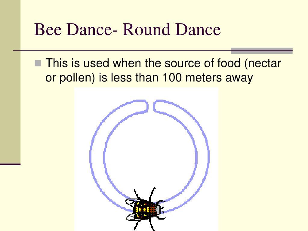 Bee Dance- Round Dance