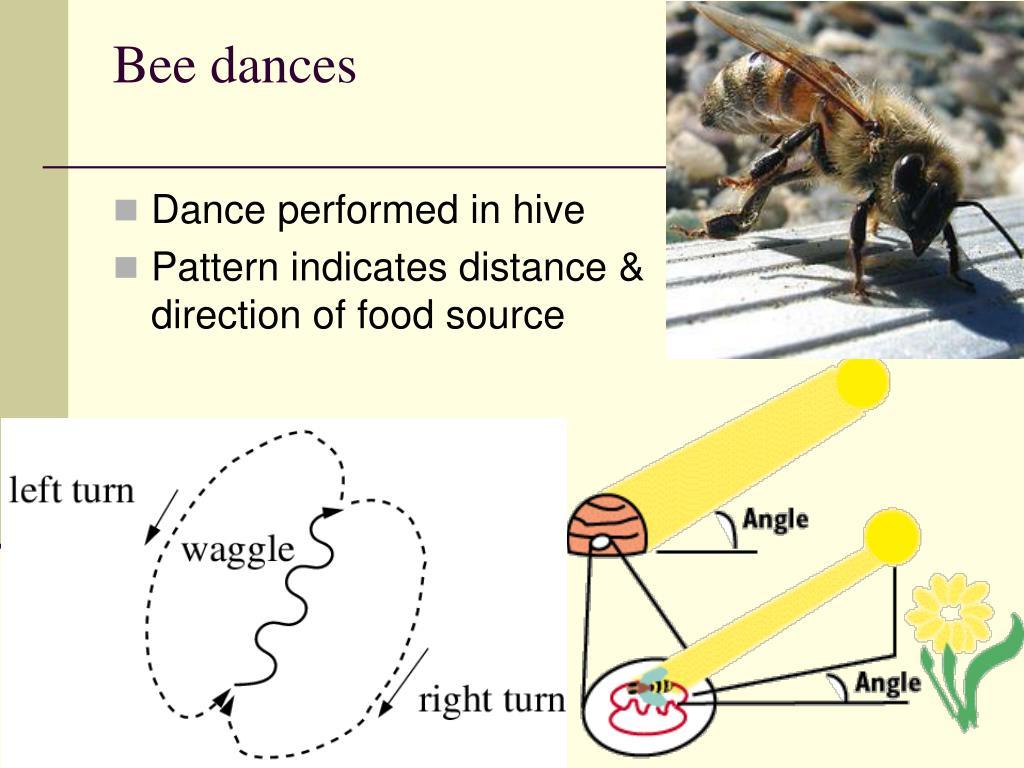 Bee dances