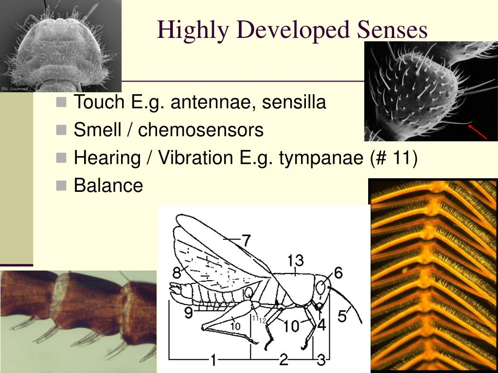 Highly Developed Senses