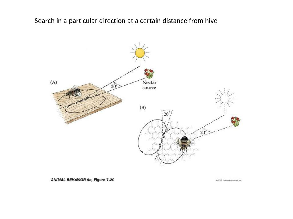 Search in a particular direction at a certain distance from hive