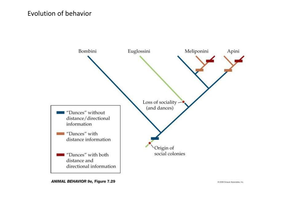 Evolution of behavior