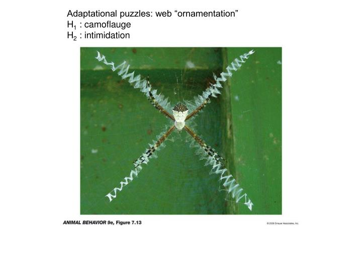 "Adaptational puzzles: web ""ornamentation"""