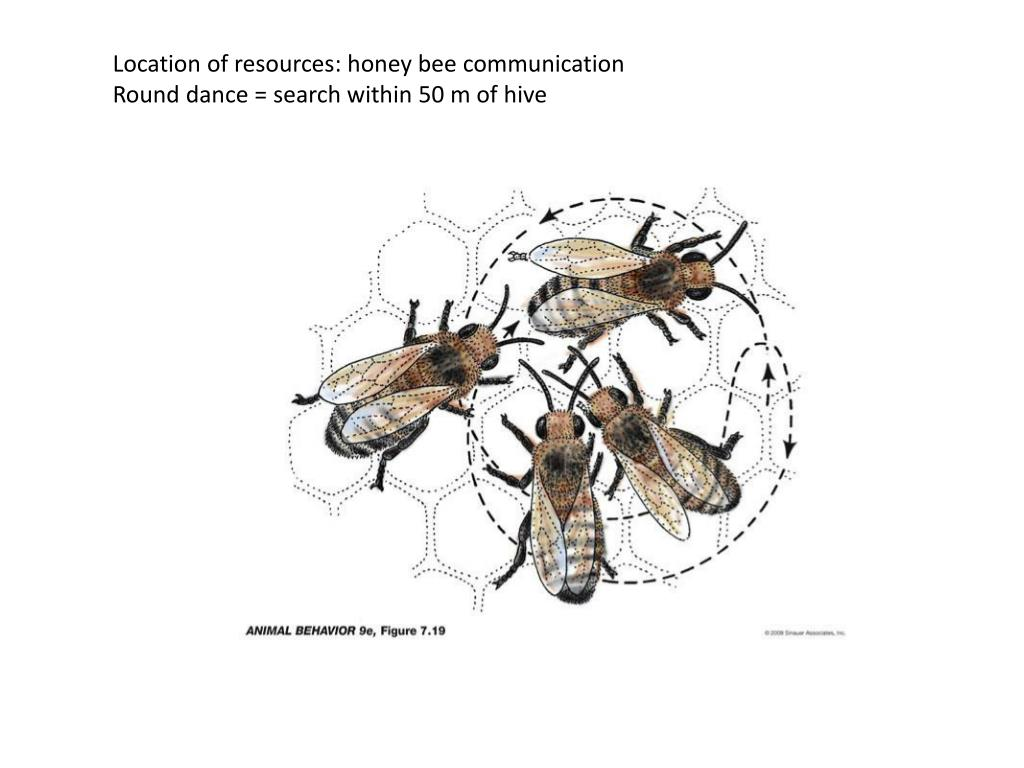 Location of resources: honey bee communication