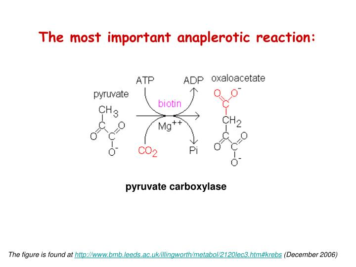 The most important anaplerotic reaction: