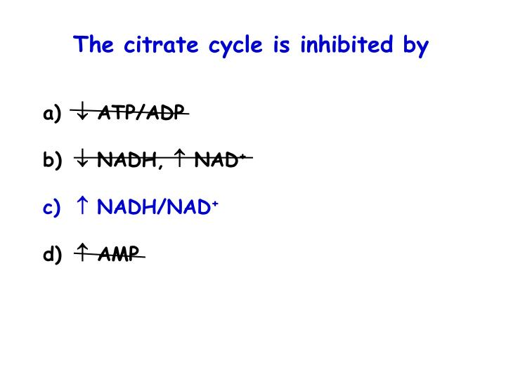 The citrate cycle is inhibited by