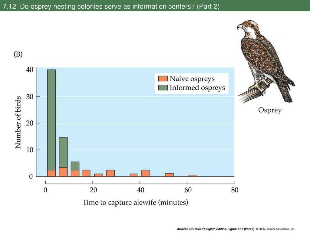 7.12  Do osprey nesting colonies serve as information centers? (Part 2)