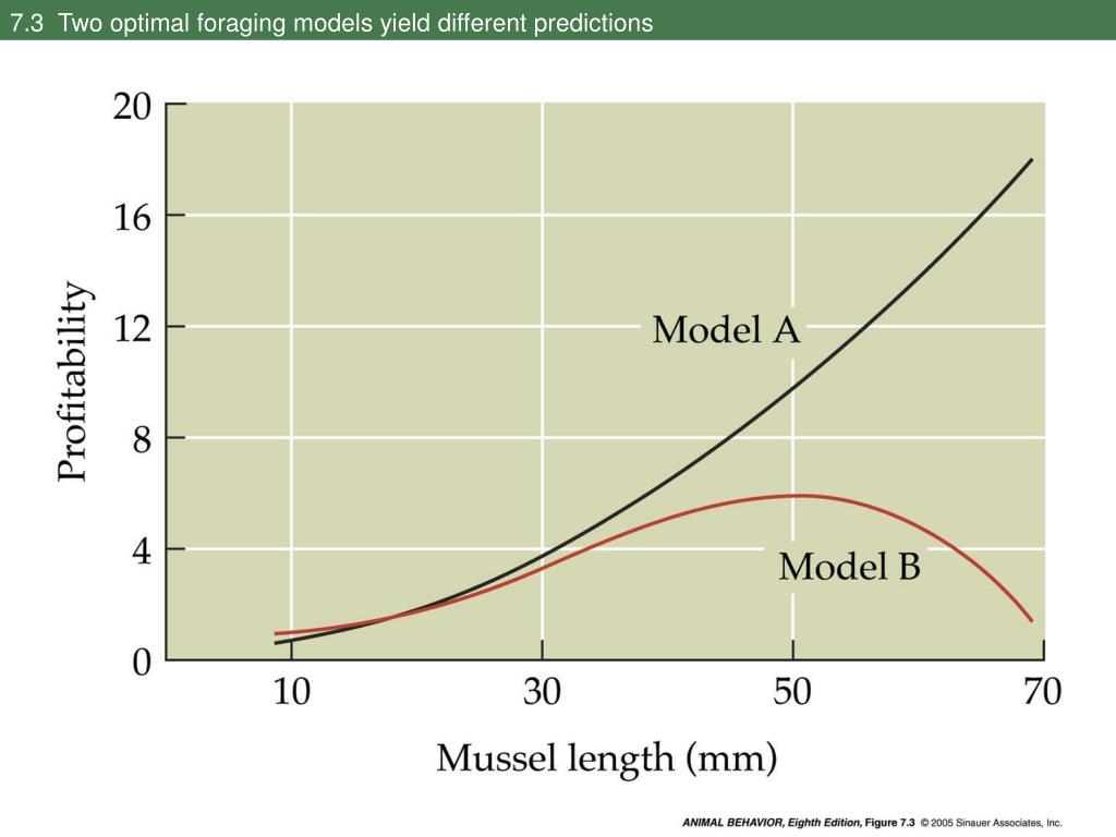 7.3  Two optimal foraging models yield different predictions