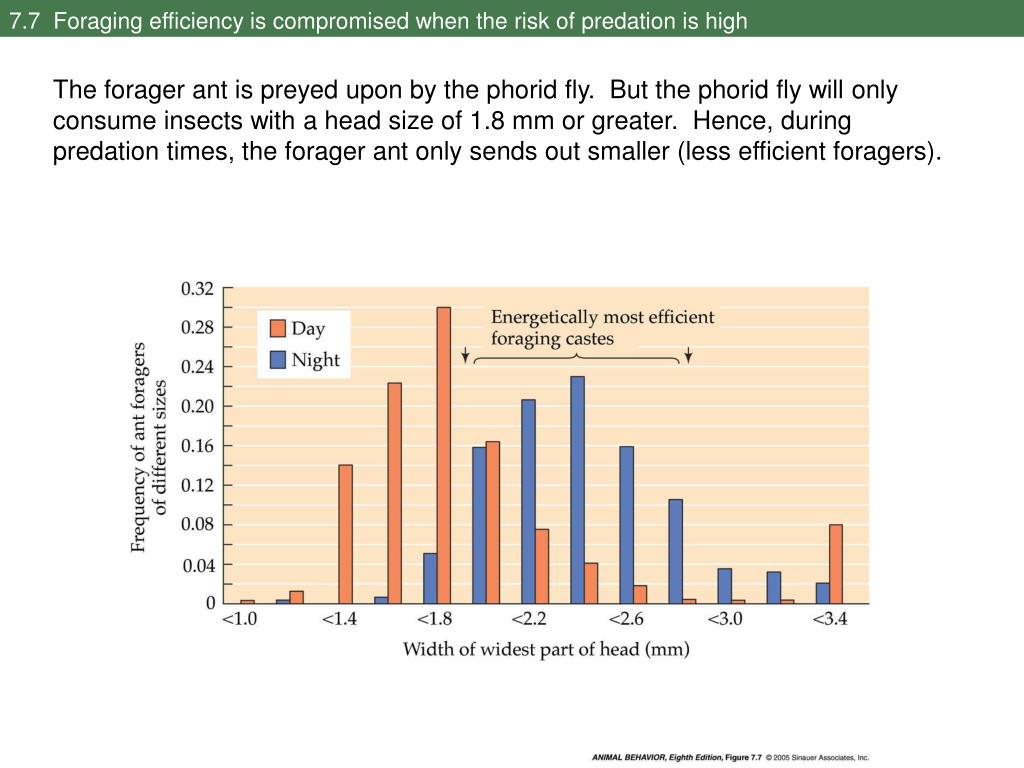 7.7  Foraging efficiency is compromised when the risk of predation is high