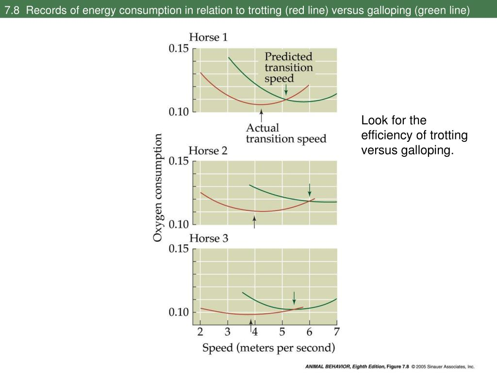 7.8  Records of energy consumption in relation to trotting (red line) versus galloping (green line)