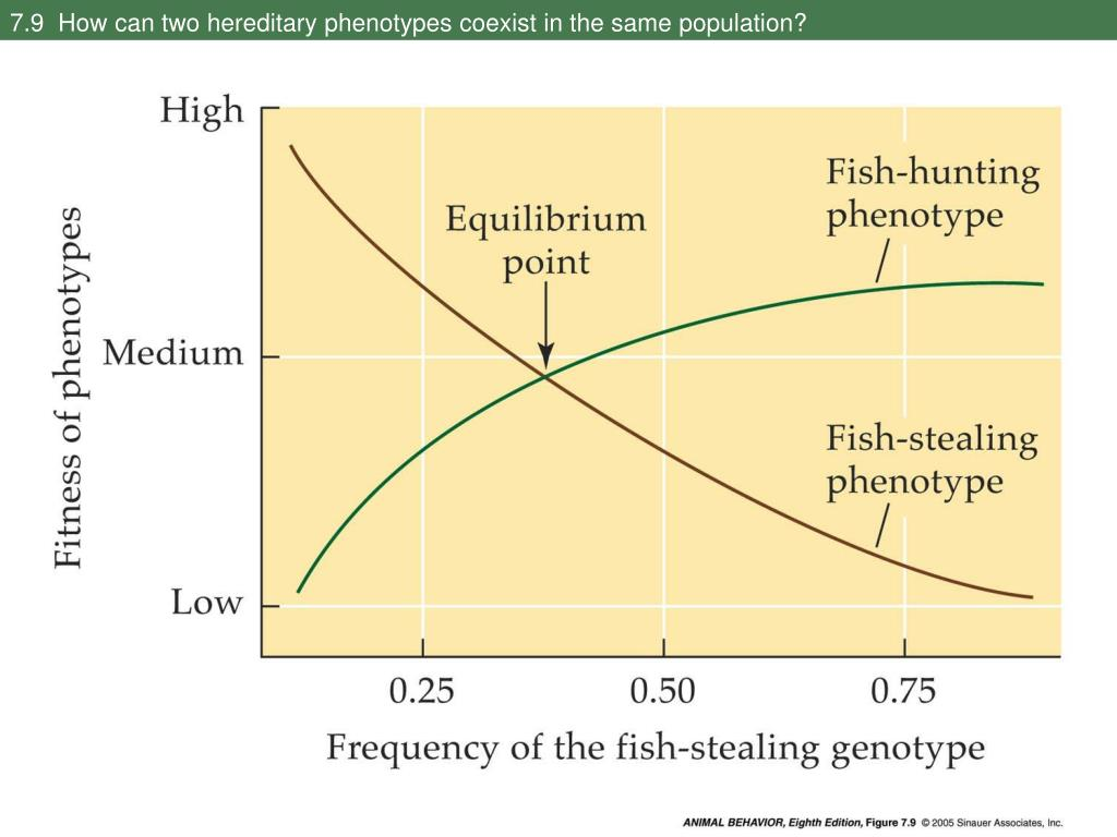 7.9  How can two hereditary phenotypes coexist in the same population?