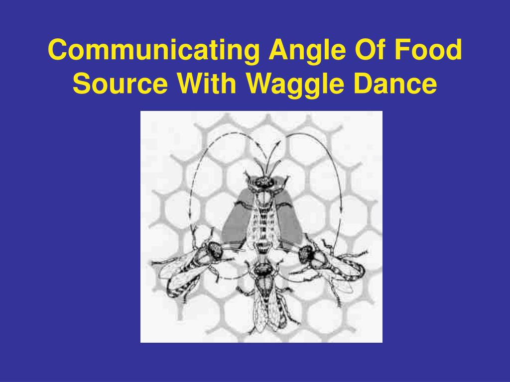 Communicating Angle Of Food Source With Waggle Dance