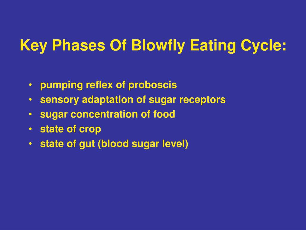 Key Phases Of Blowfly Eating Cycle: