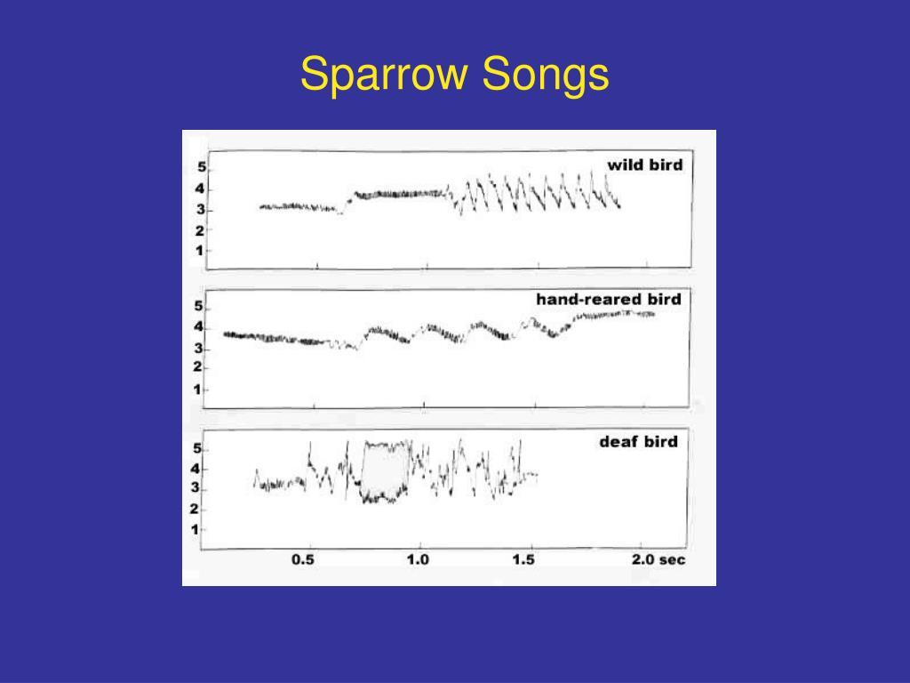 Sparrow Songs