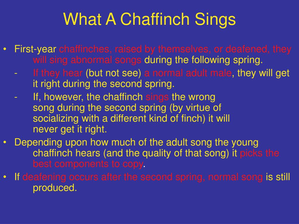 What A Chaffinch Sings