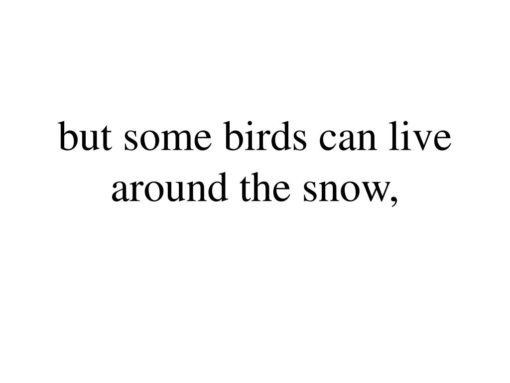 but some birds can live around the snow,