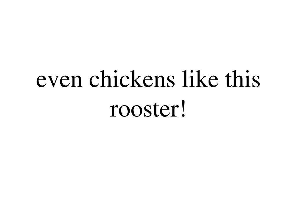 even chickens like this rooster!
