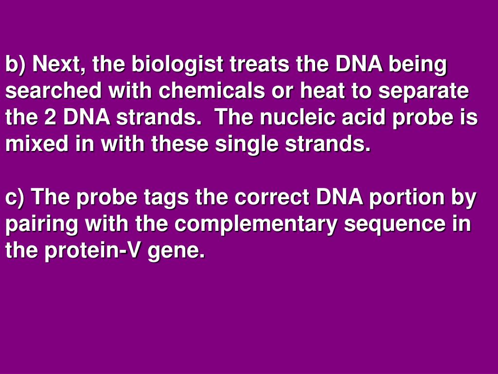 b) Next, the biologist treats the DNA being searched with chemicals or heat to separate the 2 DNA strands.  The nucleic acid probe is mixed in with these single strands.