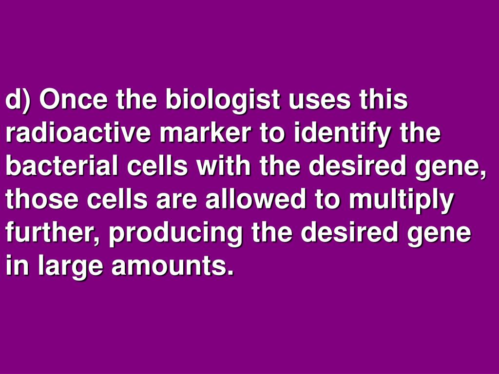 d) Once the biologist uses this radioactive marker to identify the bacterial cells with the desired gene, those cells are allowed to multiply further, producing the desired gene in large amounts.