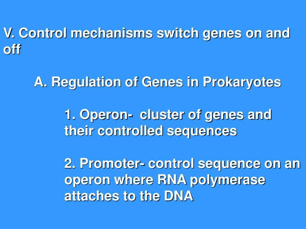 V. Control mechanisms switch genes on and off