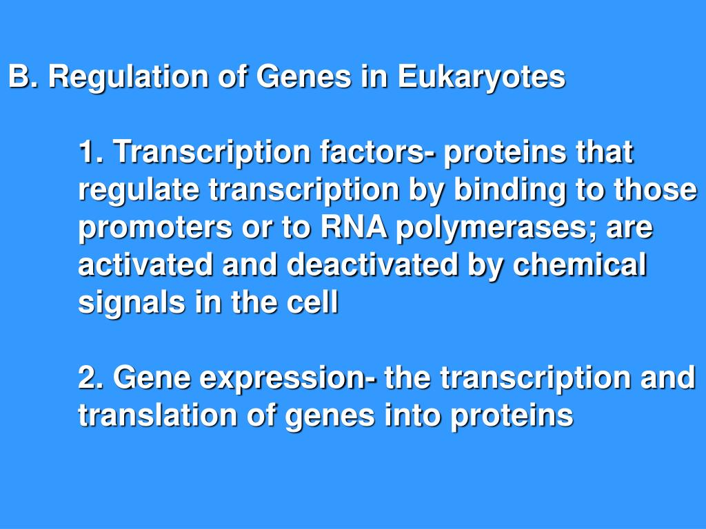 B. Regulation of Genes in Eukaryotes