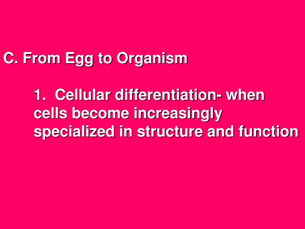 C. From Egg to Organism