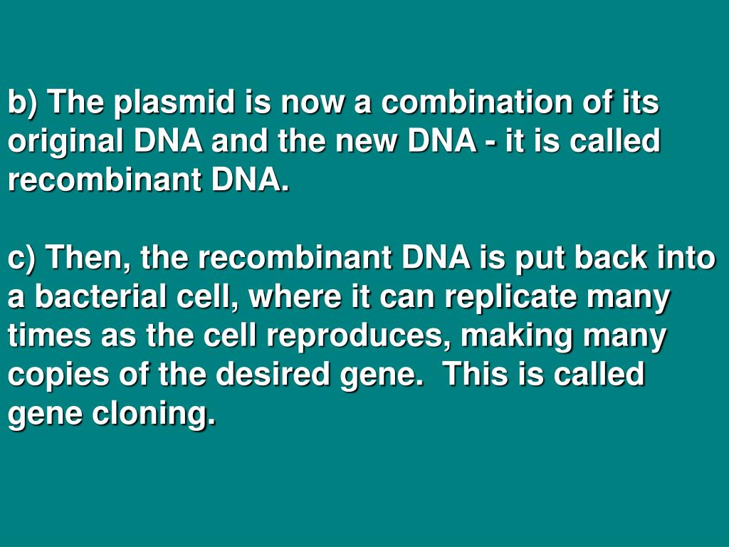 b) The plasmid is now a combination of its original DNA and the new DNA - it is called recombinant DNA.