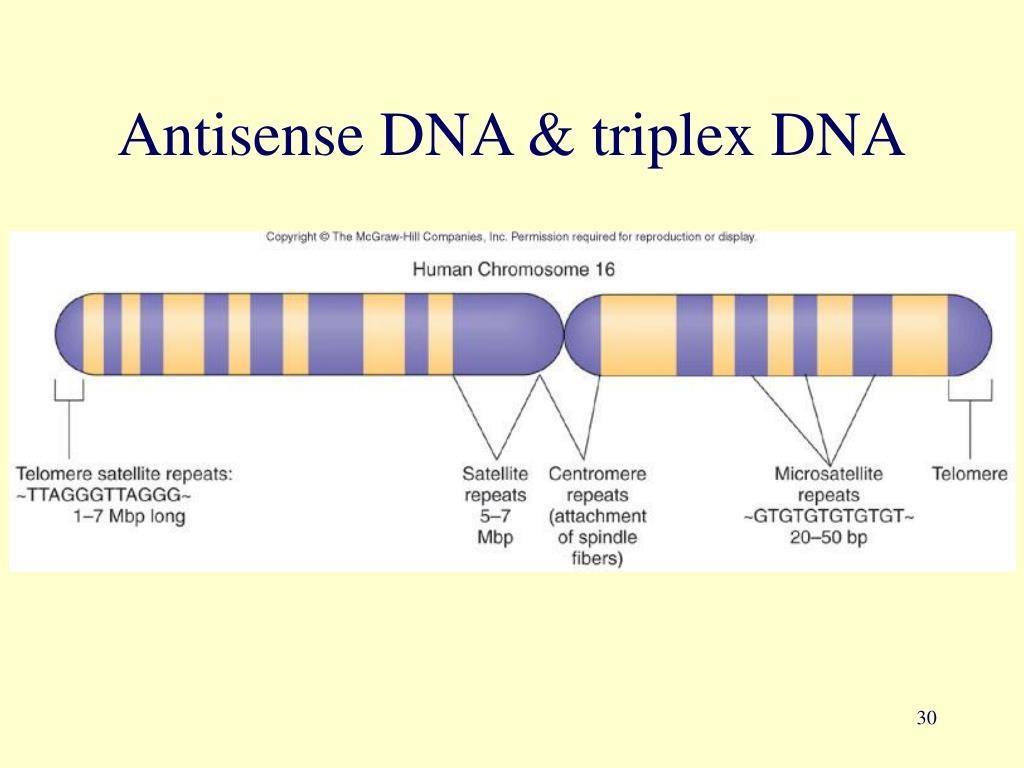 Antisense DNA & triplex DNA